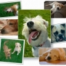 20090615080737_dog_collage.jpg